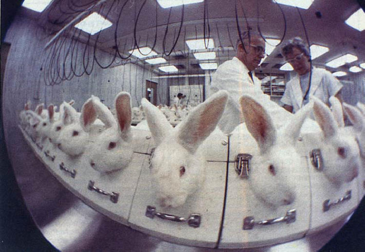 P4S is peaceful and pro-science. Vivisection is violent and anti-science.